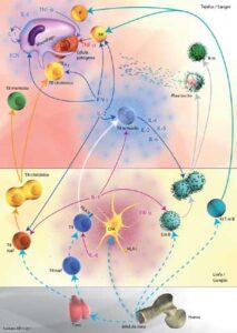 El sistema inmunitario la garantía de una buena salud