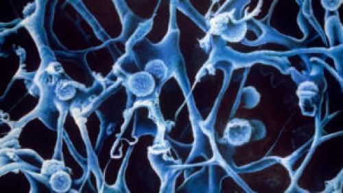 Absorción por el circuito linfático