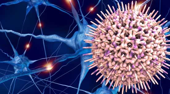 Reactivación del virus del herpes simple tipo 1 (HSV-1): ¿Riesgo de Alzheimer?
