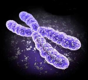 """Un estudio publicado en 2013 en """"The Lancet Oncology"""" corrobora que cambios positivos en el estilo de vida, como mejorar la dieta, practicar ejercicio de forma moderada y disminuir el nivel de estrés, pueden alargar los telómeros y prevenir el envejecimiento a nivel celular"""