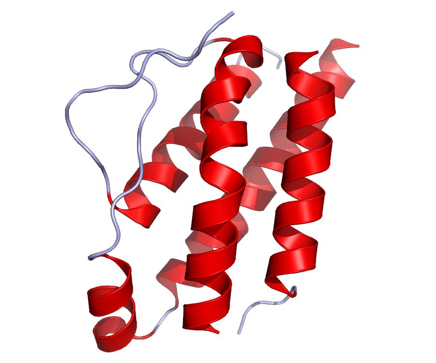 La interleucina 2: Una citoquina con múltiples funciones