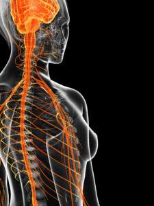 Sistema nervioso y sistema inmune: ¿una relación más estrecha de lo que pensábamos?