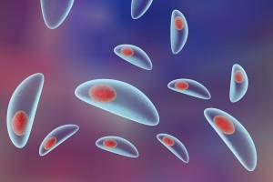 Toxoplasmosis: ¿cómo nos defiende el sistema inmune?