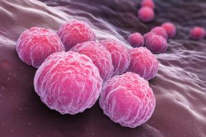 Chlamydia, una bacteria que se esconde