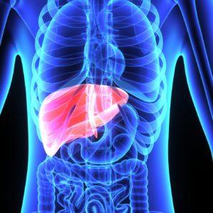 Respuesta inmunitaria frente al virus de la hepatitis B (VHB)