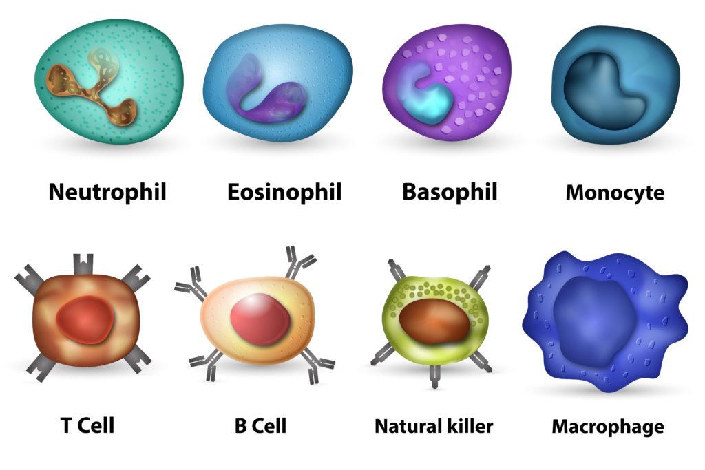 Sistema inmune frente a virus
